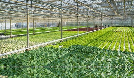 食用菌温室大棚保温棉被